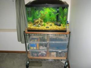 Bobs - Aquarium